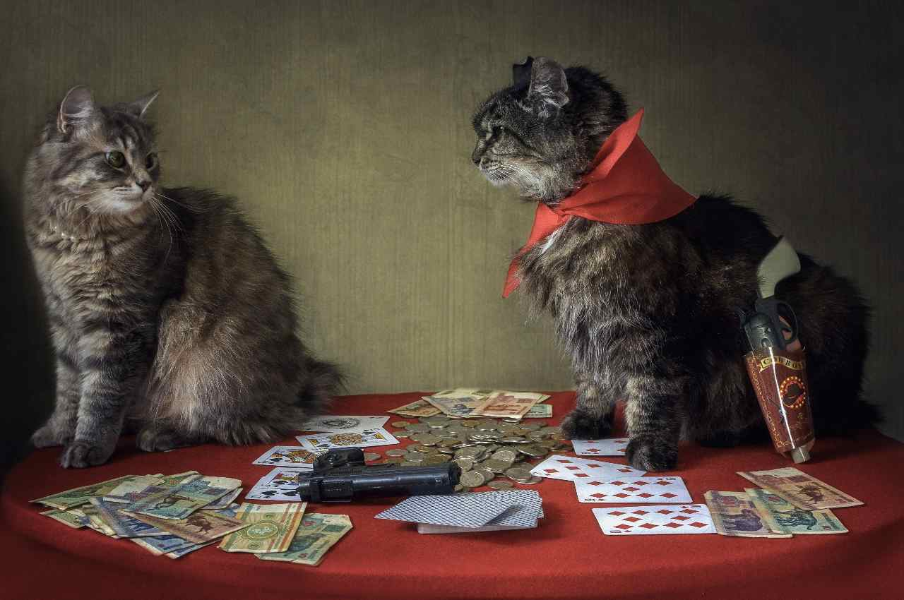 trash talking poker gatti